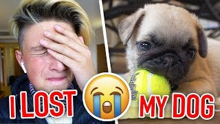 I lost my new dog... (very emotional)