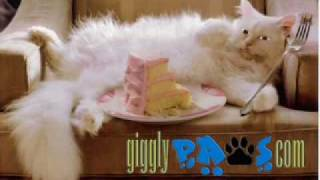 Cat Steals Birthday Cake Funny Cat Video Clip Online Birthday E Cards