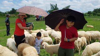 Tin Và Anh Hai Đi Xem Cừu - Kids Toy Media