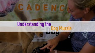 Understanding the Dog Muzzle