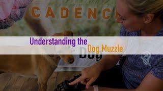 Understanding the Dog Muzzle