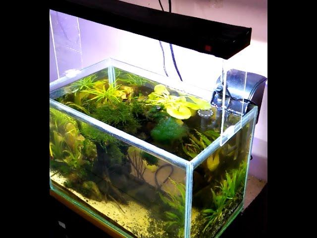 membuat led aquascape mudah murah hanya 15 menit tanpa solder ( bukan bulb )