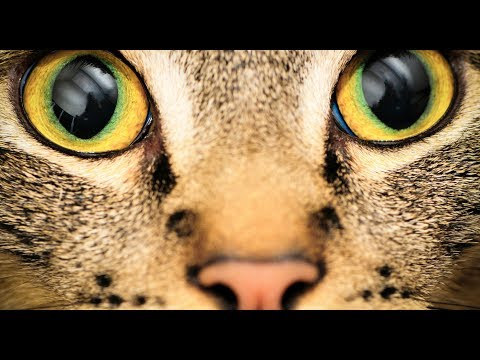 Η όραση των ζώων σε σχέση με τον άνθρωπο