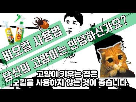 [비오킬 사용법] 진드기 잡으려다 고양이 잡는다?
