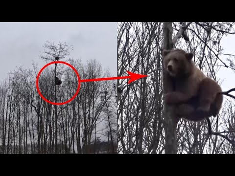 """מדהים: """"כן דובים וכן יער"""" לא תאמינו לאן הגיע הדוב • צפו"""