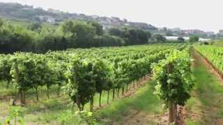 preview picture of video 'Alella, la vinya de Barcelona . Ets Alella . 2014'