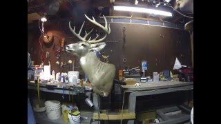 Taxidermy Deer Head Time Lapse