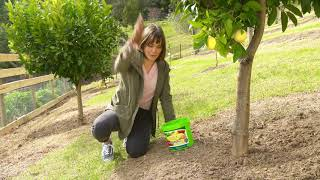 The Garden Gurus - Looking after your citrus trees