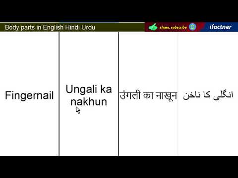 Download English Vocabulary Body Parts Name With Picture And Hindi