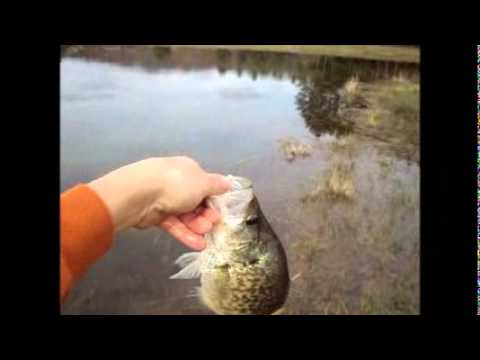 Pond fishing Crappie