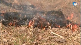 На территории Новгородской области установлен пожароопасный сезон