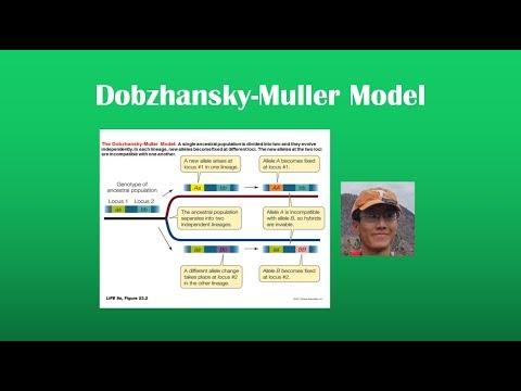 Caratteristiche del trading di opzioni binarie