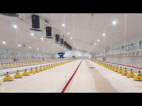 , title : 'How To Choose LED Lighting For Your Poultry Farm? Explained