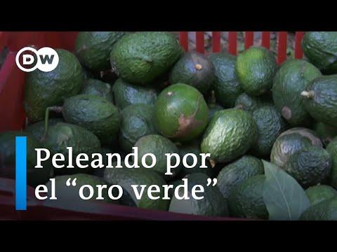 La Seguía En Chile Como Consecuencia Del Cultivo Aguacate