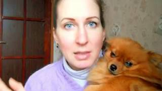 Как воспитывать щенка ? Почему щенок злой и кусается ?