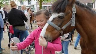 Paarden en Pony's in Heenvliet op de 333e PAARDENMARKT