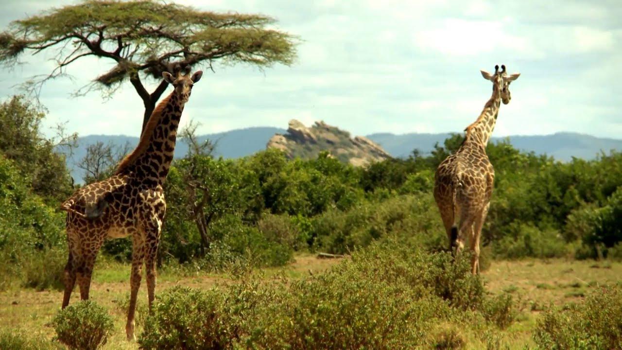 Tansania: ArushaNP (1:09)
