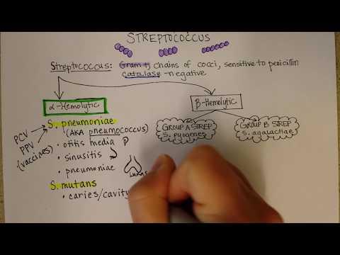 Da li je moguće liječiti prostatitisa oraha