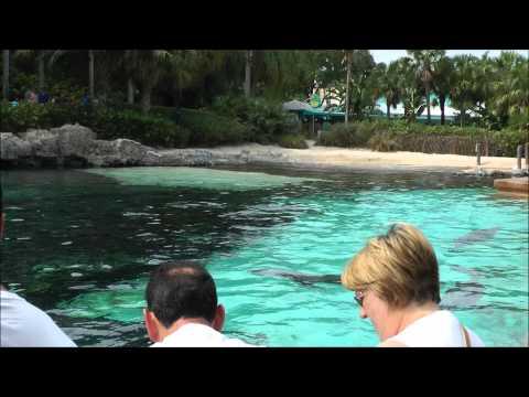 Dolphin Cove®