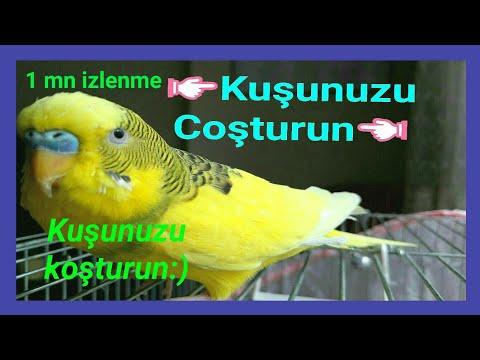 ●KUŞUNUZ ●ÇILDIRACAK! #muhabbetkuşusesi #muhabbetkuşusesleri#kuşları #korkutanses#çağırma#sesi#Dinle