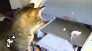 Улетные кошки и собаки ржака!