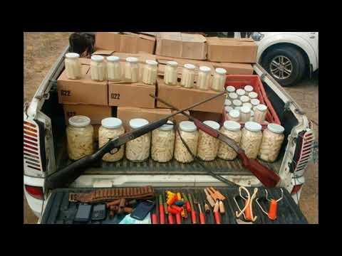 Polícia Militar descobre fábrica de palmito clandestina em Juquitiba