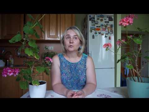 Комнатные растения для Овна. Цветы Овна символы карьерного роста и личностного успеха!