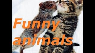 Funny animals. These is LOVE