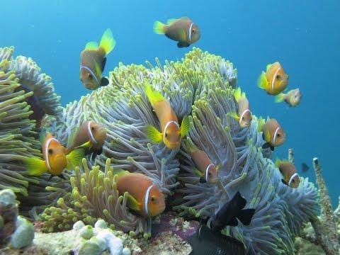 Unterwasserwelt der Malediven (Süd Male Atoll), Süd-Male-Atoll,Malediven