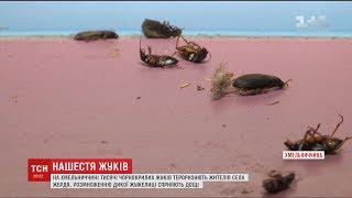 Жителі села на Хмельниччині скаржаться на нашестя чорнокрилих жуків