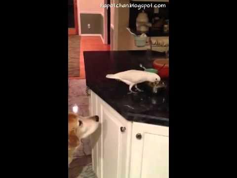طائر ببغاء يطعم كلب
