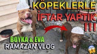 KÖPEKLERLE İFTAR YAPTIK!! - PİTBULL BOYKA&EVA | (RAMAZAN VLOG) 🙏🏻