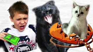 КОШЕЧКА Марфа Попала в КАПКАН!  Кошка Никиса не бросила Марфу в БЕДЕ!