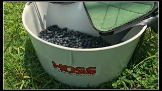 Blueberry Picking & HOSS TOOLS!