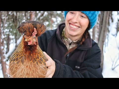, title : 'Keeping Chickens in Extreme Cold   Off Grid Alaska