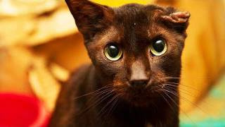 700 Cats Rescued From Cruelty in Florida