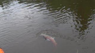 Рыбалка в осе пермский край на 10 дней