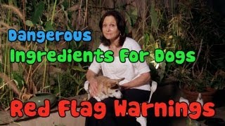 Dangerous Ingredients for Dogs - Red Flag Warnings  - Dog Gone Good