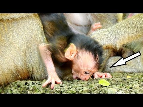 OMG ! BIG MISTAKE YOUNG MUM DEE DEE...WHAT'S REASON HAPPENED ON BABY MONKEY DELENA?