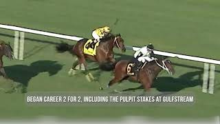 Sole Volante - Belmont Stakes Contenders 2020