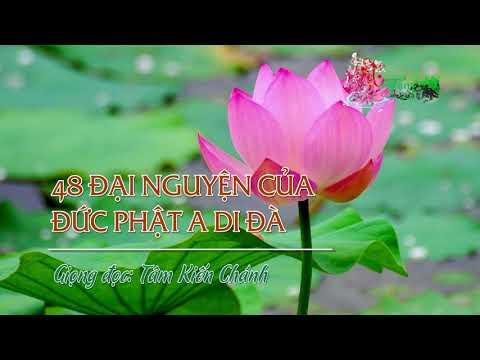 48 Đại Nguyện Của Đức Phật A Di Đà -  Tâm Kiến Chánh đọc