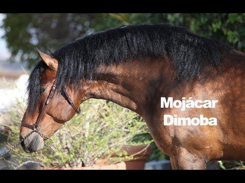 Mojácar Dimoba - Marzo 2018