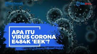 Apa Itu Virus Corona E484K 'Eek' yang Ditemukan di Jakarta?