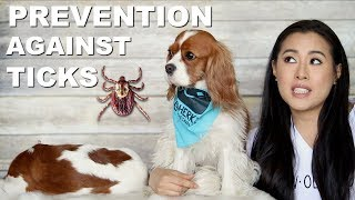 TICK PREVENTION for Dogs | Lyme Disease American Dog Tick | Nexgard Advantix