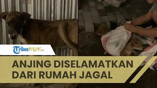 Viral Belasan Anjing Diselamatkan dari Rumah Jagal Bantul, Ditemukan dalam Kondisi Mengenaskan