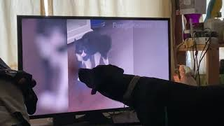 "Oakley Watching  ""🤣 Funniest 🐶 Dogs and 😻 Cats - Awesome Funny Pet Animals' Life Videos 😇""Part 1"