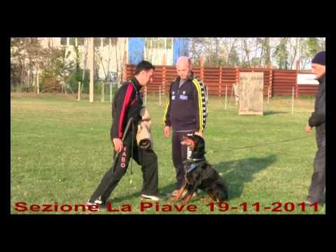 immagine di anteprima del video: Golubaya Krov ERMIONE