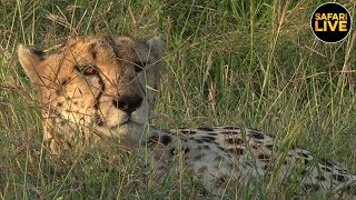 safariLIVE - Sunset Safari - July 15, 2019