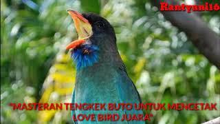 #lovebird  Suara Tengkek Buto Gacor Suara Rapat Durasi Panjang Satu Jam Full,Masteran Lovebird Juara