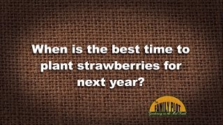 Q&A - When is the best time to plant strawberries?